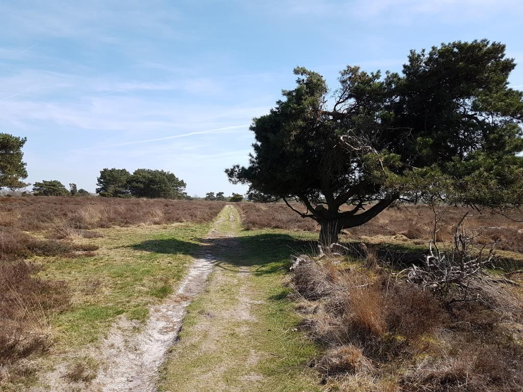 Experience Drenthe, a province full of beautiful nature